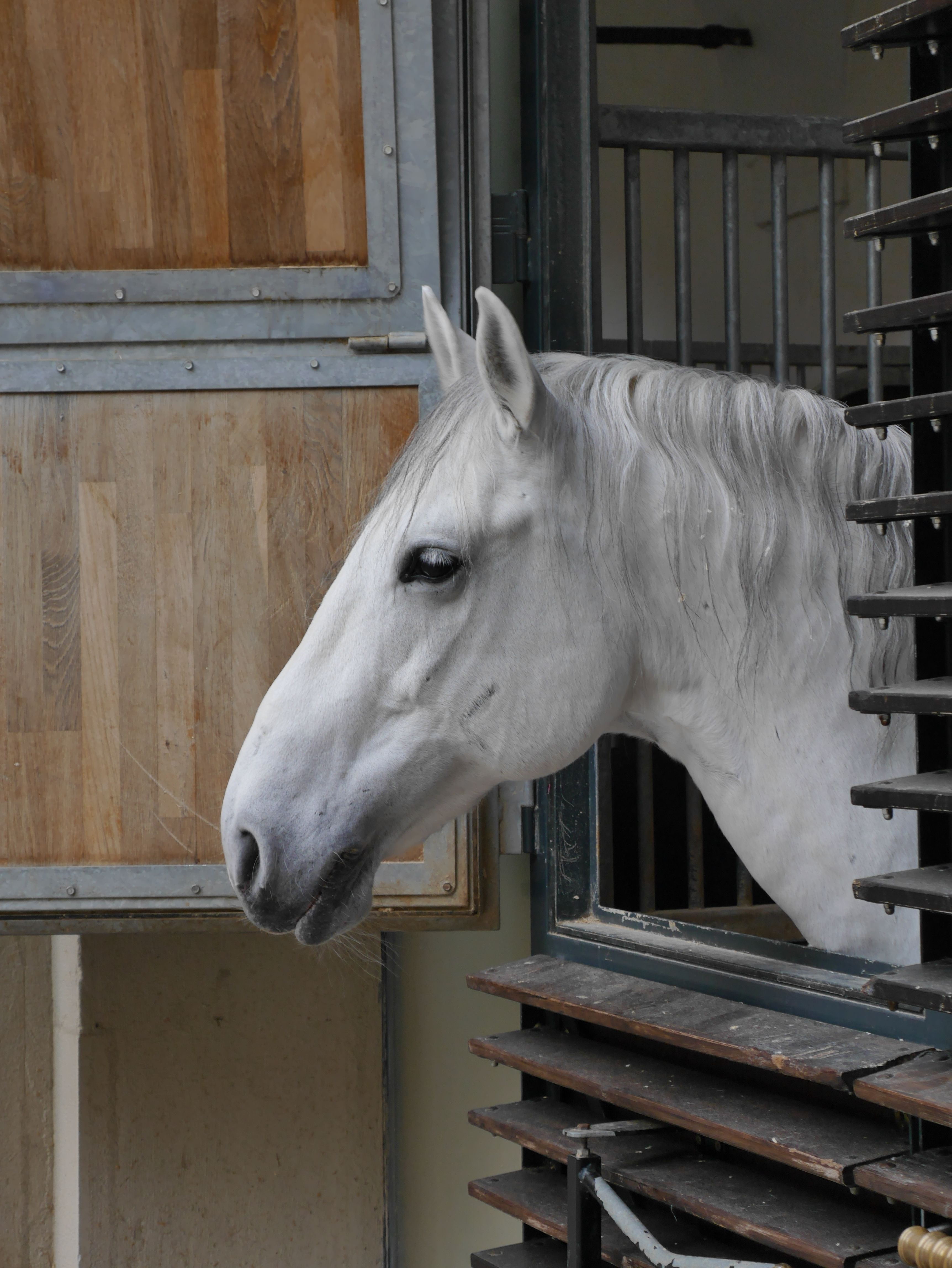 Fiiiiine hesten sin det!Foto: Are Thunes Samsonsen, Akam.no