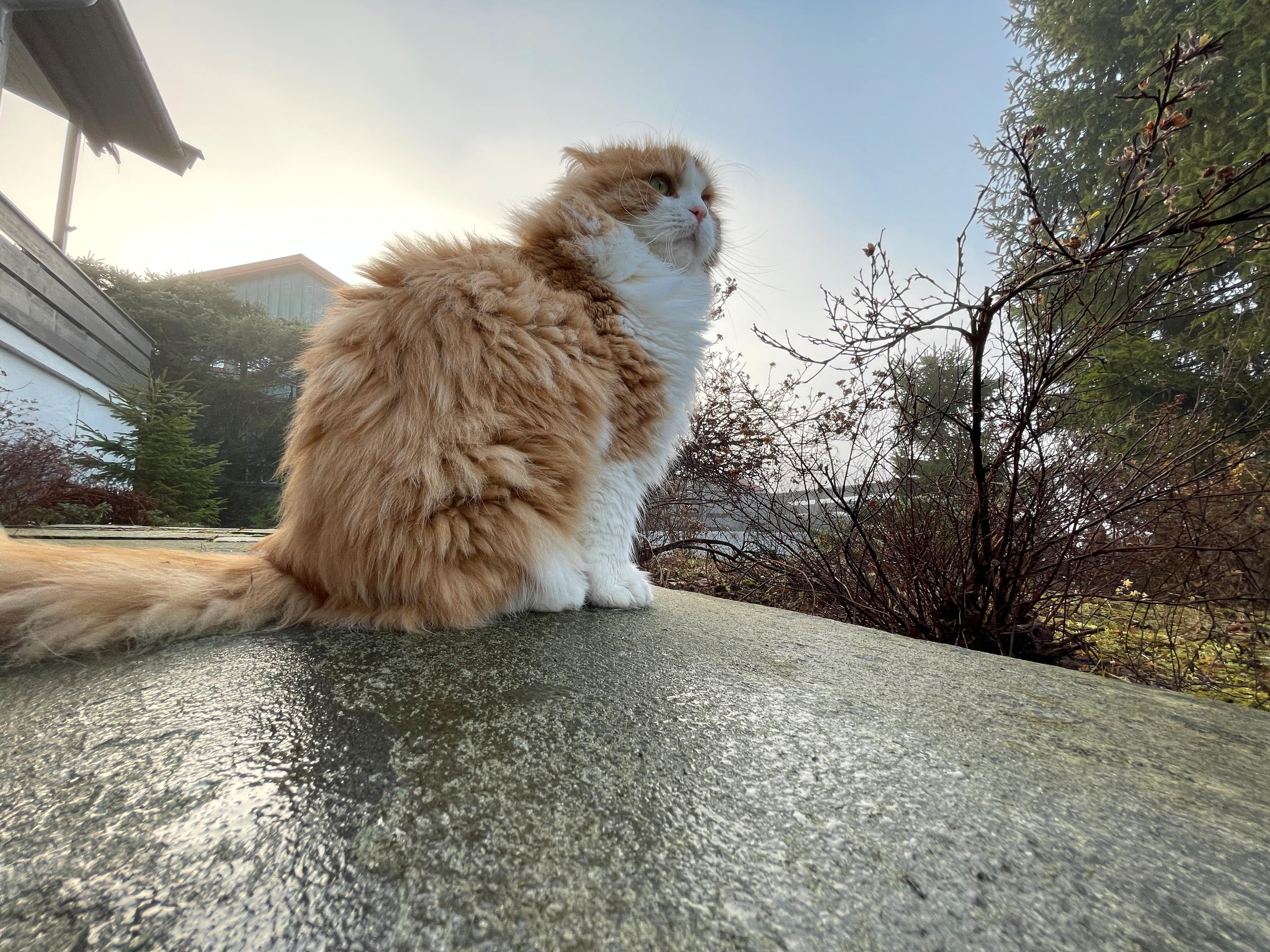 Katt fanget i vidvinkel.