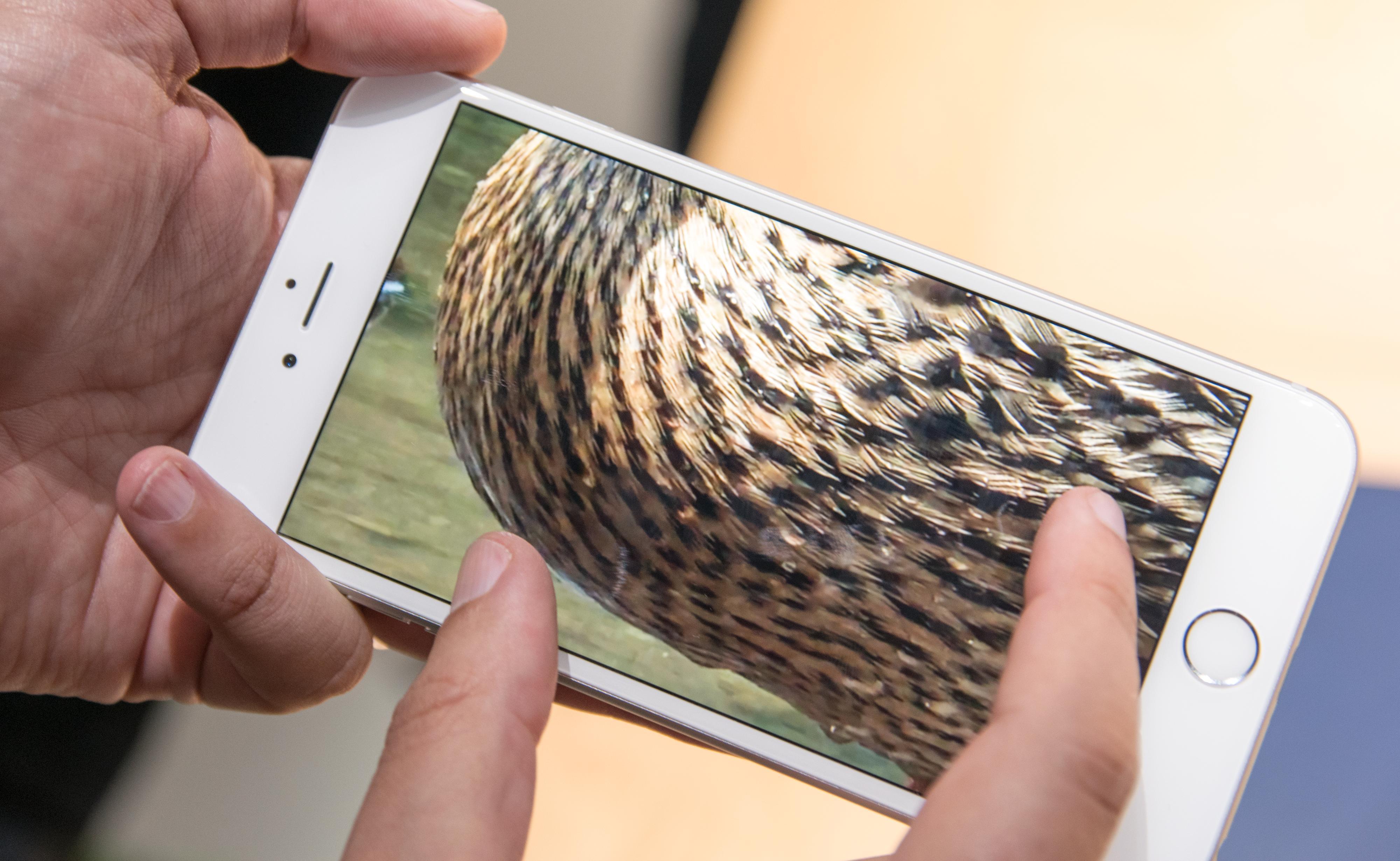 Denne anden var i utgangspunktet en av en hel gjeng fjørfe. Siden videoen skal ha vært filmet med en iPhone i 4K-modus kan vi zoome helt inn på fjærdrakten. Foto: Finn Jarle Kvalheim, Tek.no