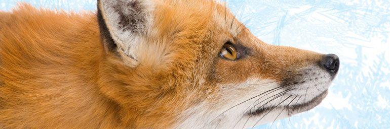 Firefox skal bli kjappere