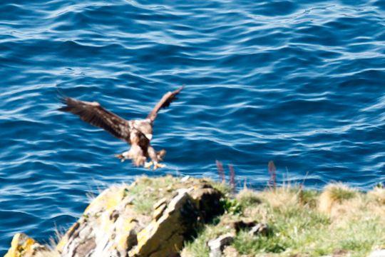 ...men av og til velger kameraet å fokusere på bølgene i stedet for selve fuglen.
