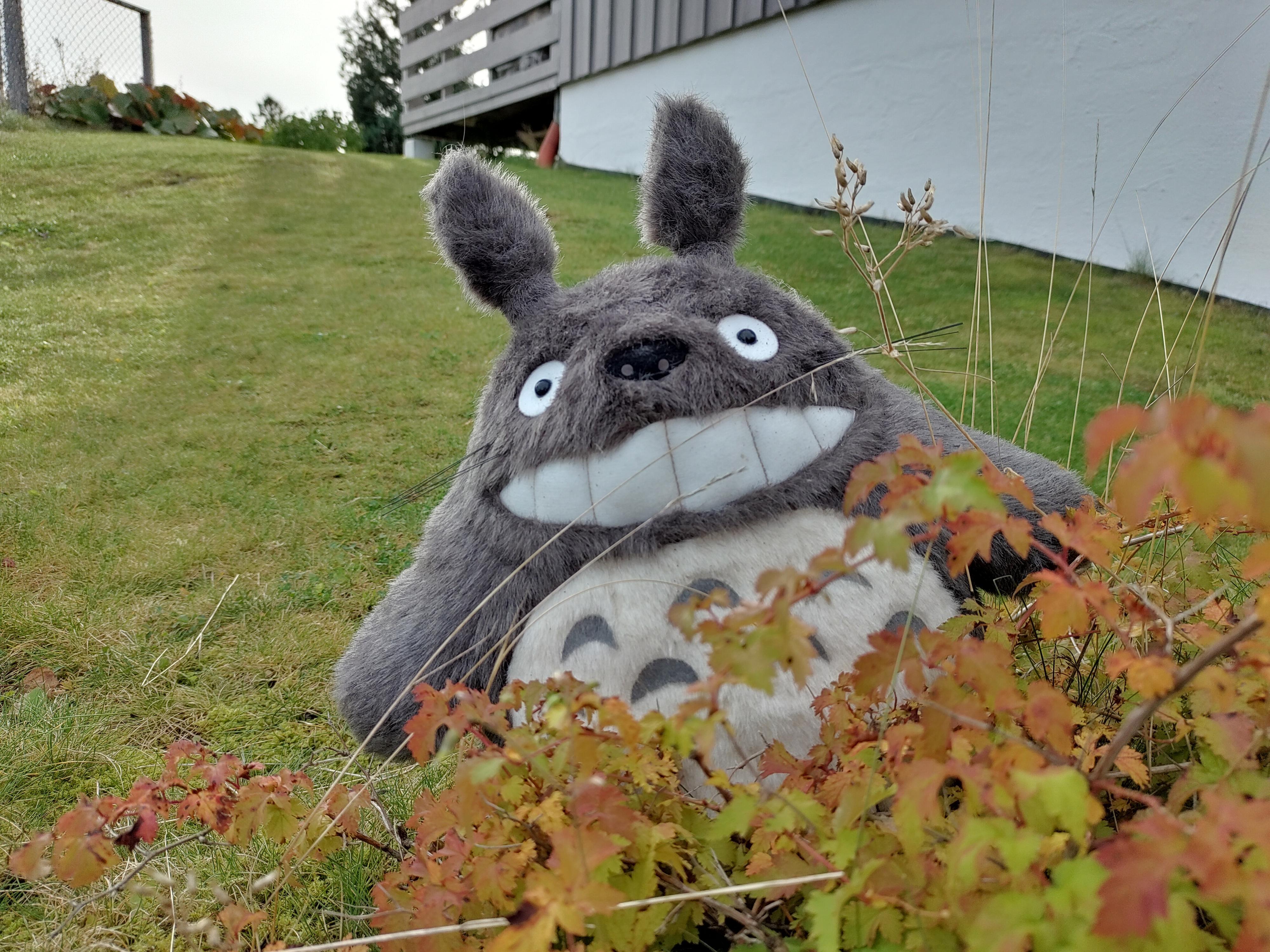 Totoro på en litt disig fredag.
