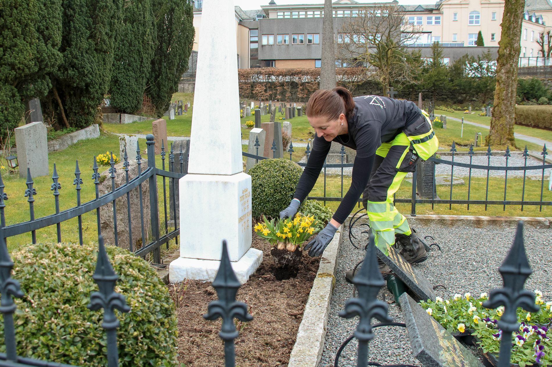 BORT MED PÅSKEN: Catharina Haaberg, arbeidsleder i Akasia gravstell, fjerner halvvisne påskeliljer på familiegraven på Haukeland gravplass som nå skal få vårblomster på plass.