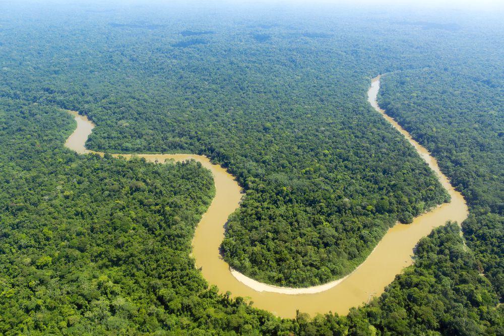 Å skrive ut hele Internett, inkludert den mørke delen, ville gjort et merkbart innhugg i regnskogen. Foto: Dr. Morley Read/Shutterstock.com