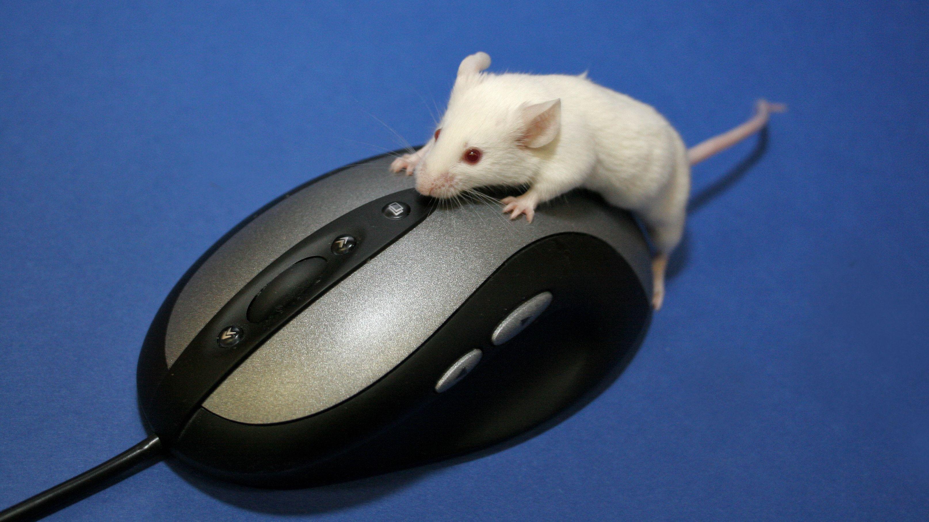 Femti år med mus: