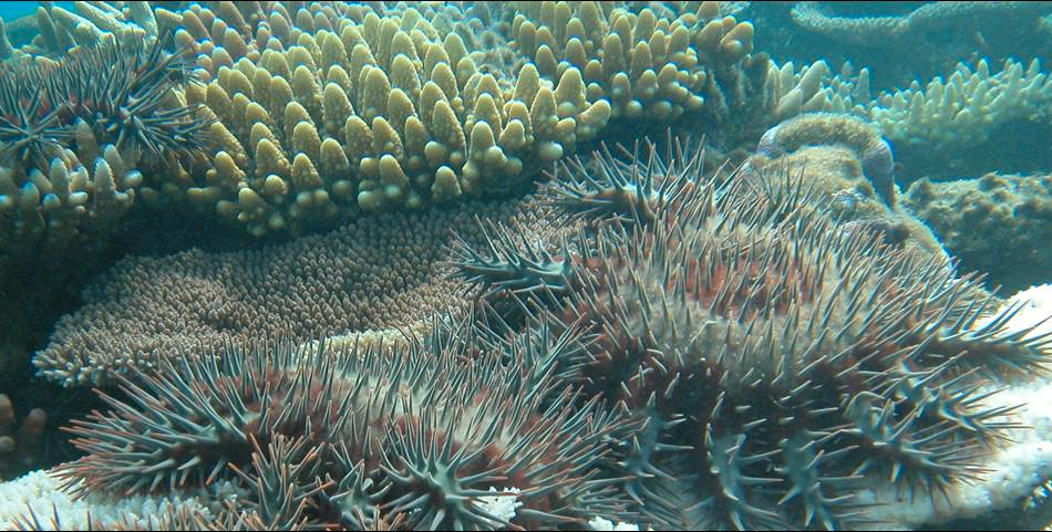 Nam, nam, korallrev! Foto: Queensland University of Technology