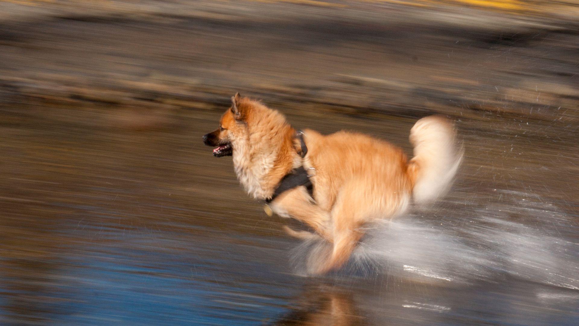 Med lukkertid på for eksempel 1/30 kommer raske bevegelser tydelig frem. (Foto: Kristoffer Møllevik)