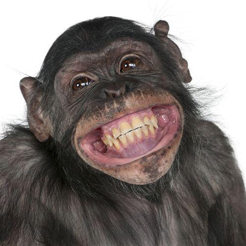 I eksperimentet ble det benyttet apekatter og rotter, men det skal også bli mulig å bruke teknologien på mennesker. Foto: Eric Isselee/Shutterstock.com