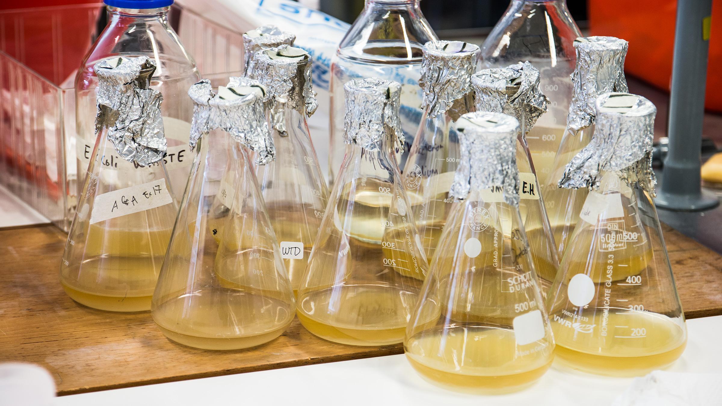 Mystiske kolber, flasker, glass og petriskåler er nødvendigvis innslag på en bakterielab.Foto: Varg Aamo, Hardware.no