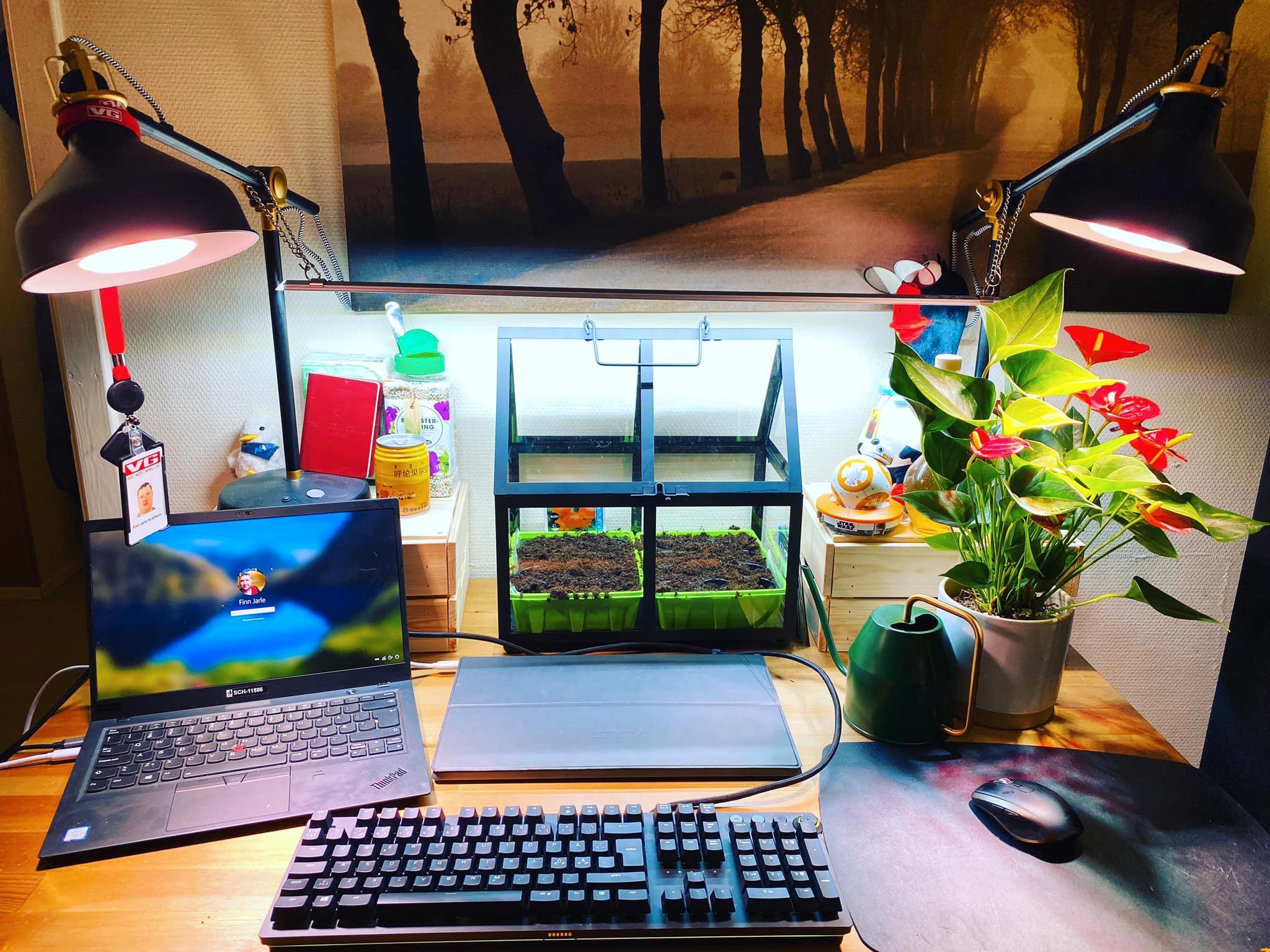 Minidrivhus som muligens kommer til å bli overgrodd før sosial distansering er over. Knatrete tastatur, PC, ekstraskjerm og plante. Ingen liker tastaturet. Selv ikke på laaaang avstand.