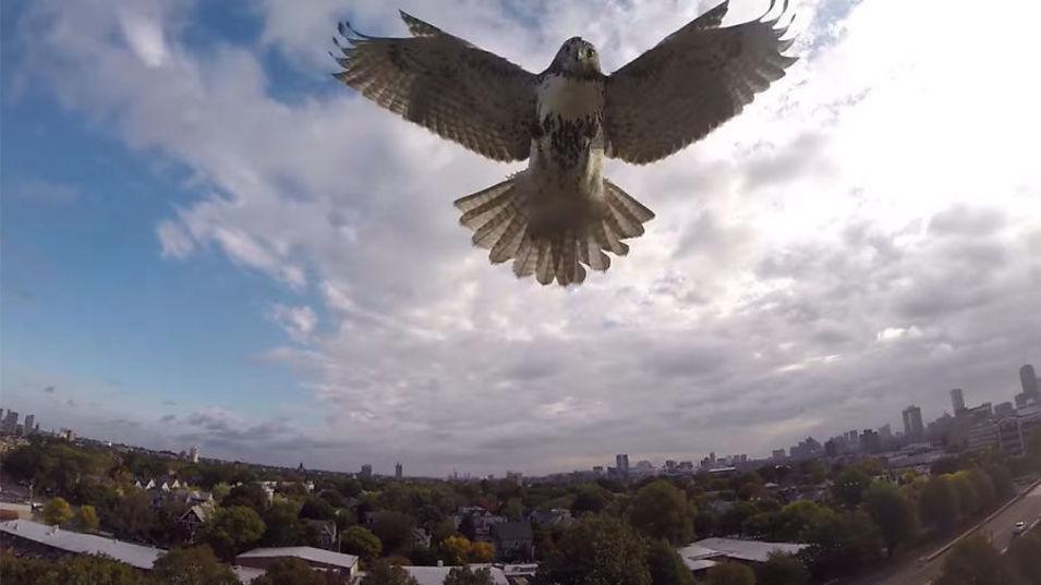 Du er ansvarlig for skader dronen din gjør, og det kan gå galt når du minst aner det. Dette var omtrent det siste dronen så før den styrtet i bakken.