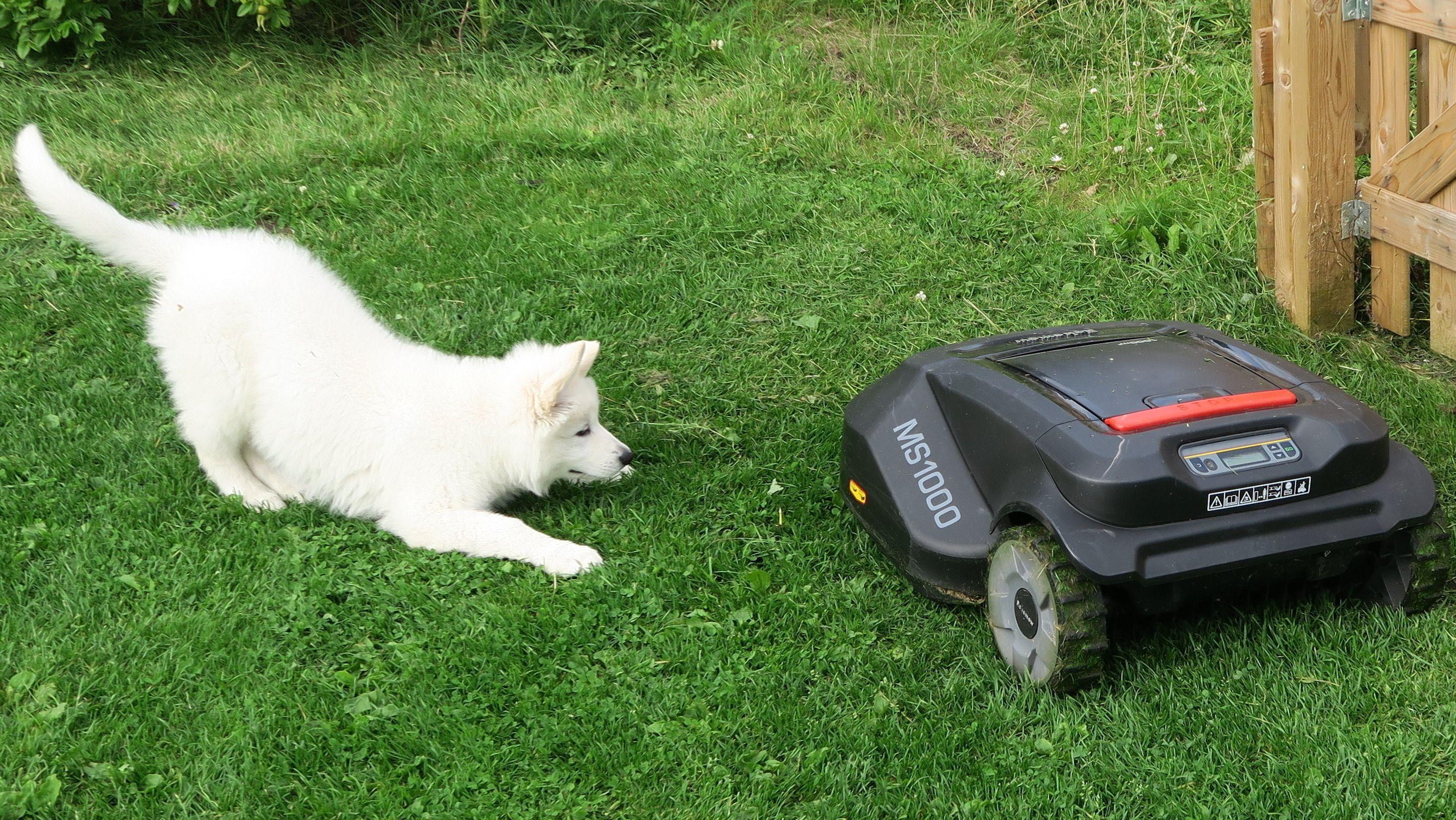 Få grønnere gress med robotklipper