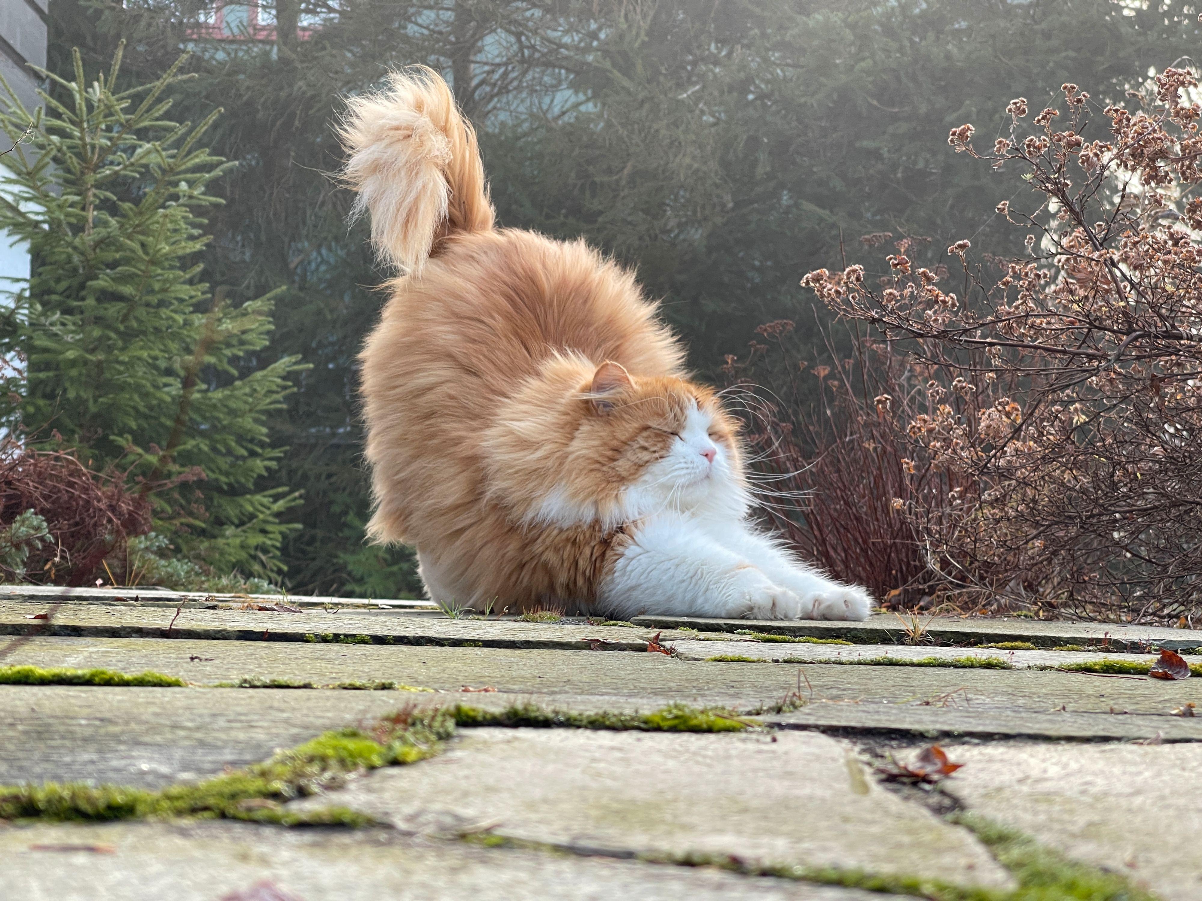 Yogacat.