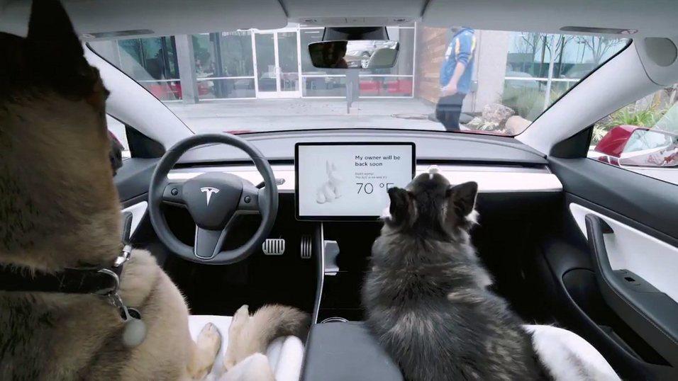Tesla fikser hundemodus-feilen etter to dager