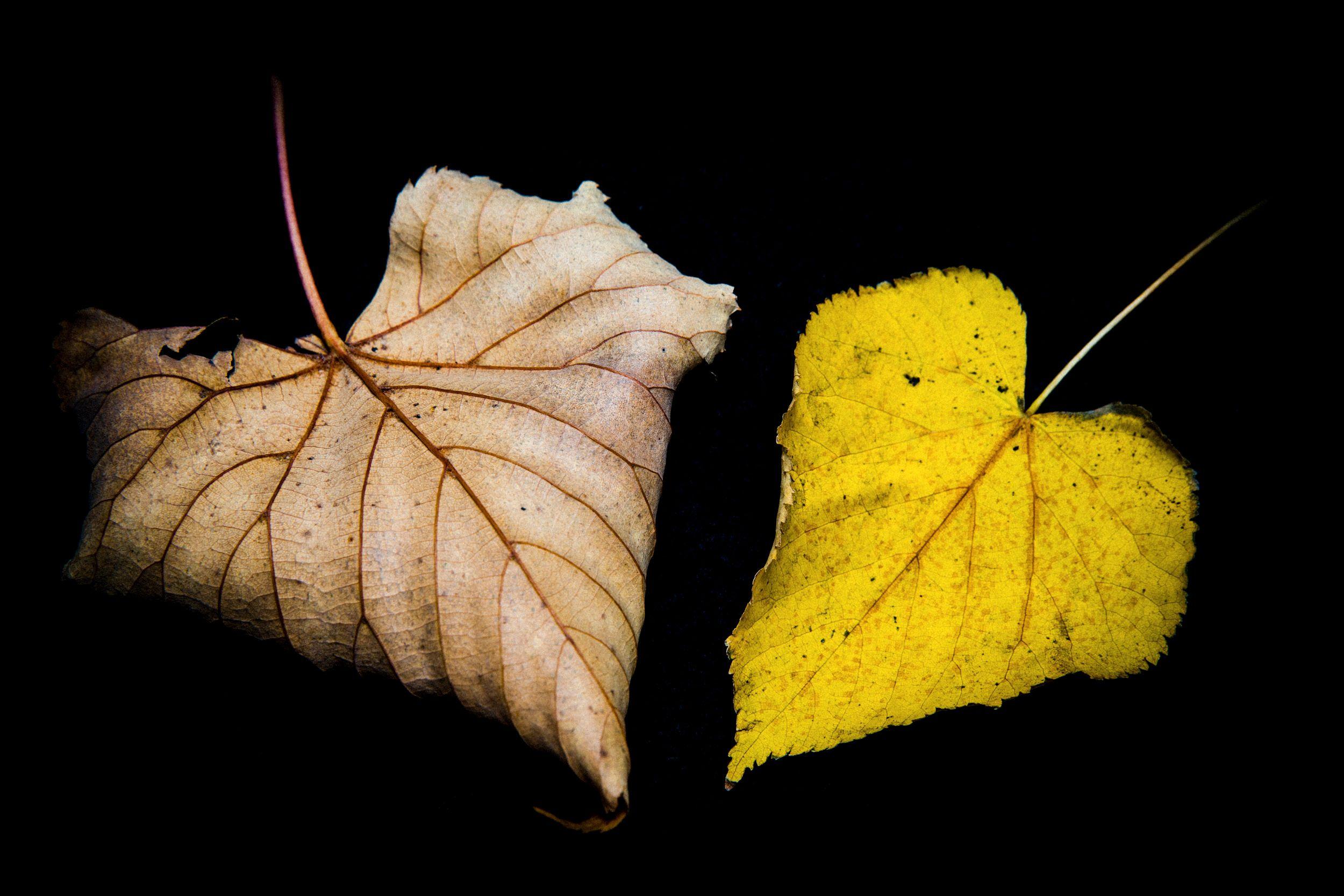 «Two of hearts». Foto: Bildekritikkbruker «PETTER»