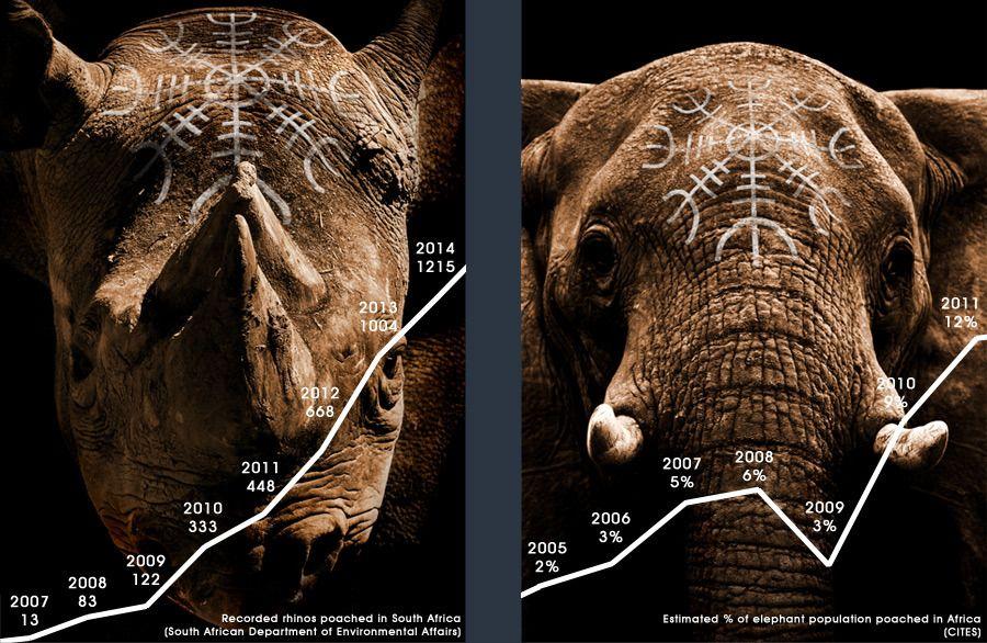 Krypskyttere herjer i Sør-Afrika. (Trykk for større bilde)Foto: Protect