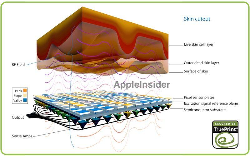 iPhone 5S kan få fingeravtrykksleser. Foto: AppleInsider