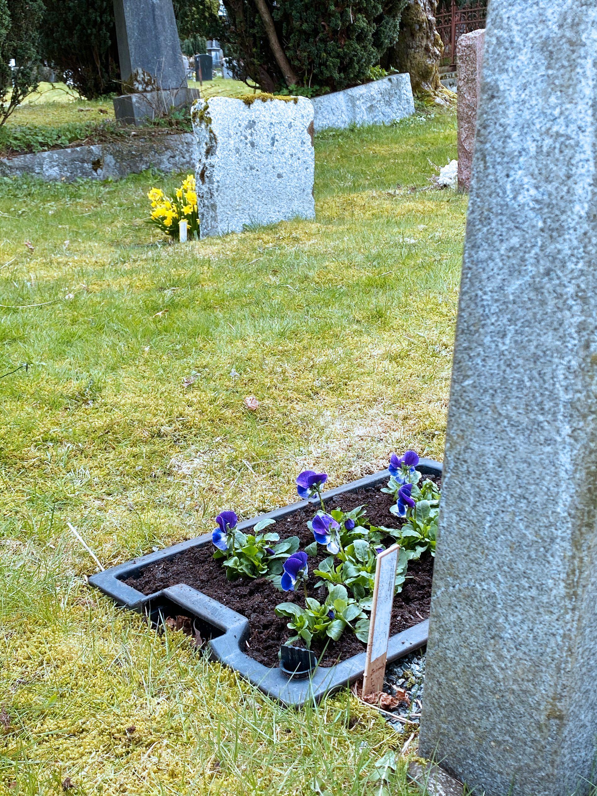 ULIKE STELLAVTALER: Foran et eksempel på en grav med selvvanningskasse som har fått vårblomster på plass. Den lengst vekke har påskeliljer som skal byttes ut.