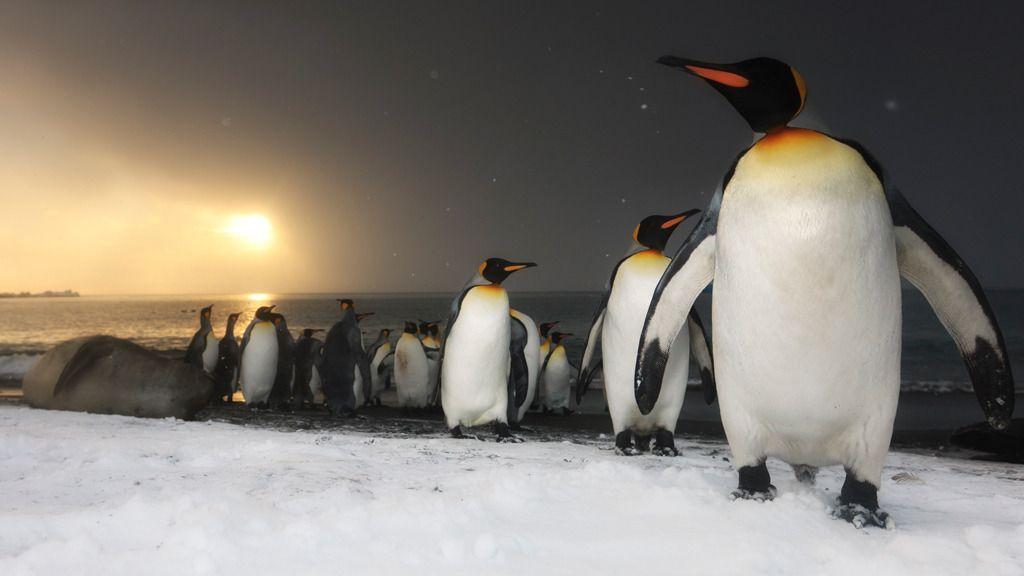 Foto: naturepl.com / Ole Jorgen Lioden / WWF