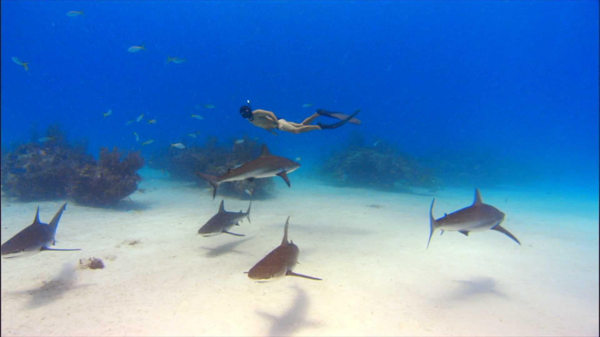 Sharkwater er fylt med vakre bilder