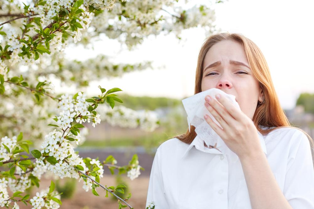 Pollenallergi är vanligt i Sverige
