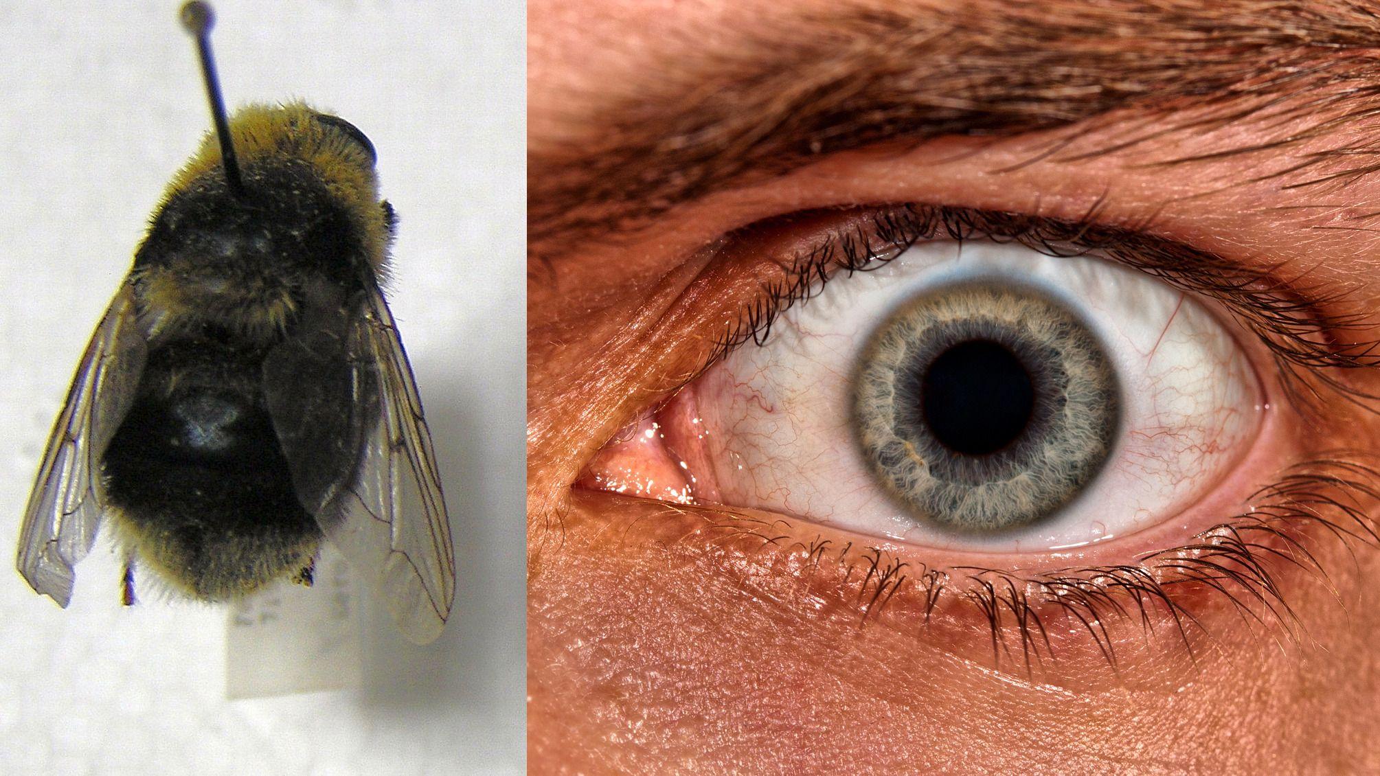 Ikke se på denne flua