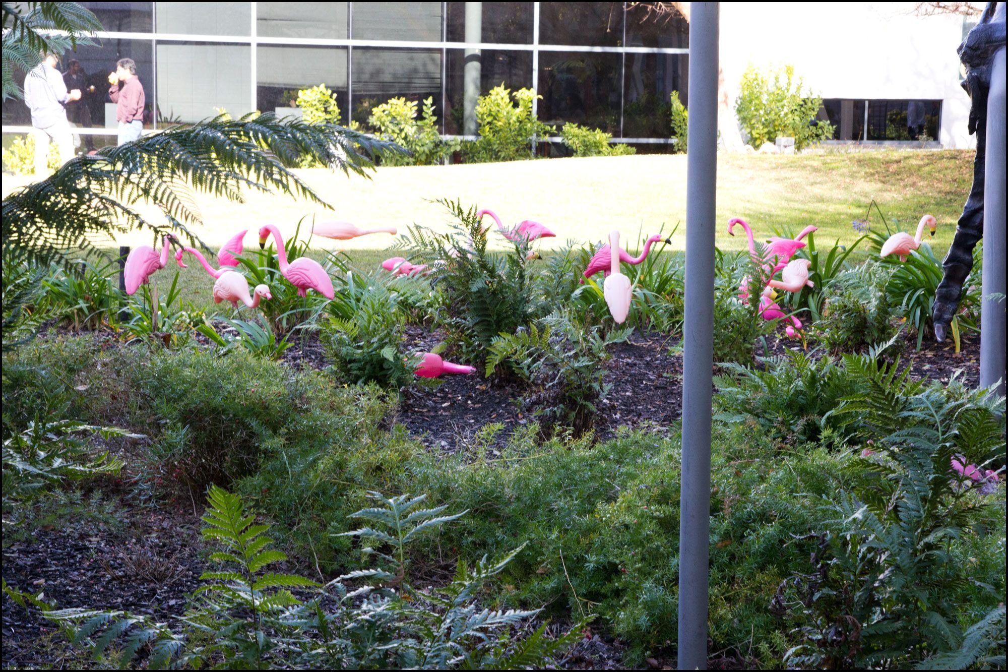 Rosa flamingoer, hos Google
