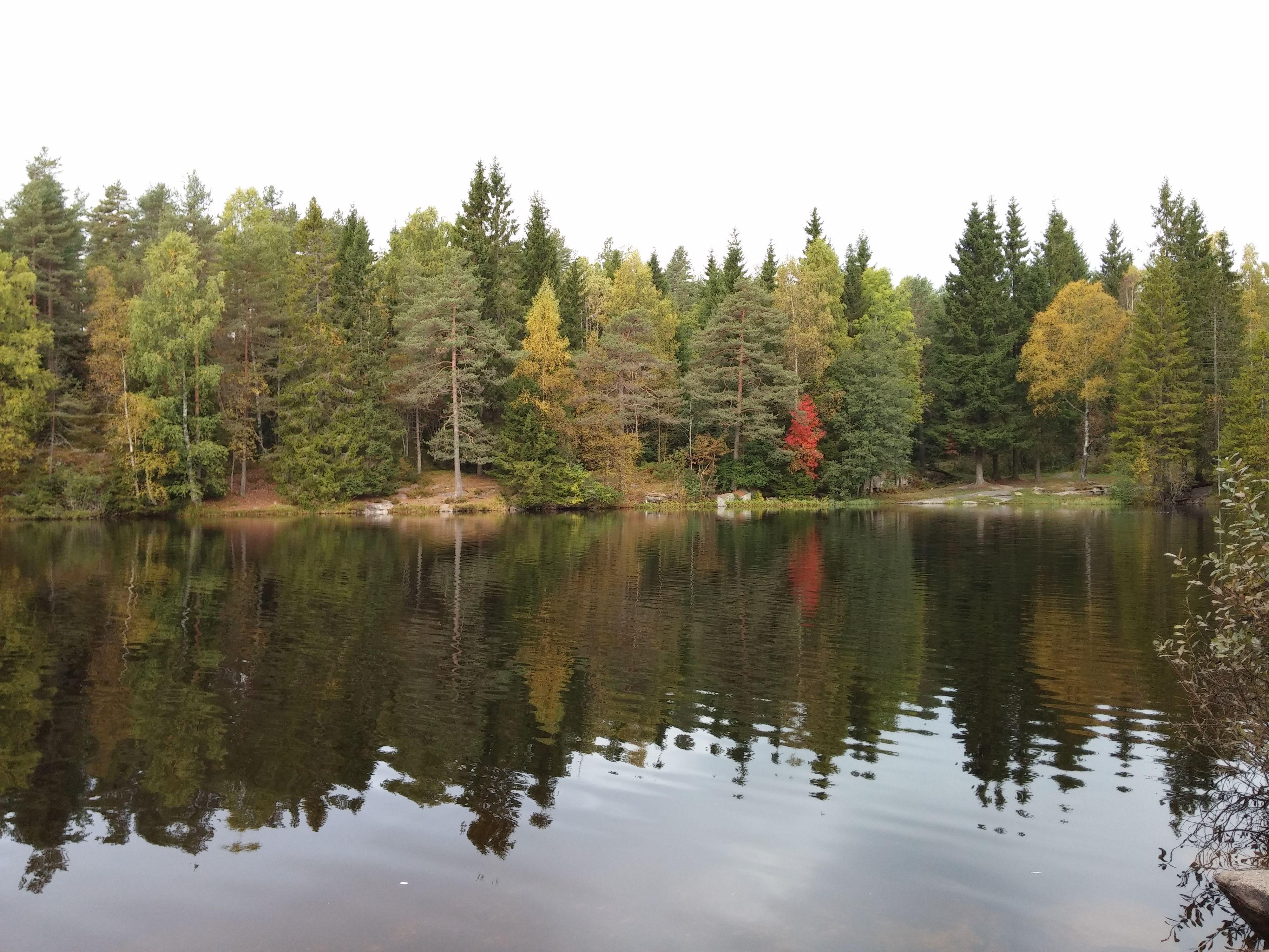 Skogsbildet fra sammenlikningsmontasjen i full størrelse.