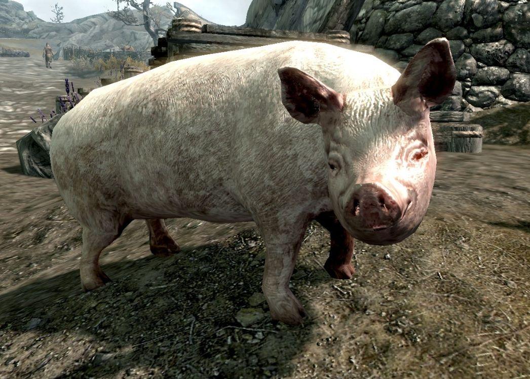 Strengt tatt er det ingen griser i Skyrim. Med mindre du installerer noen, da.Foto: Goosy Goosa +
