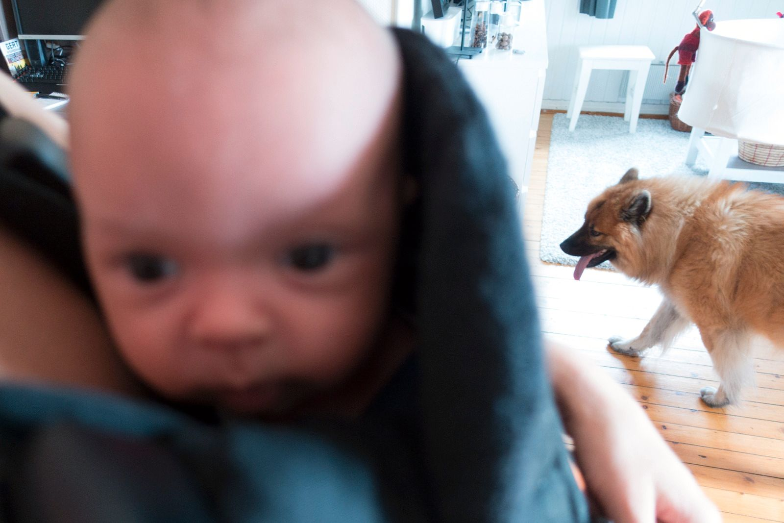 Jess, bra jobba kamera, det var hunden som skulle være i fokus her. Takk for hjelpen... Foto: Kristoffer Møllevik