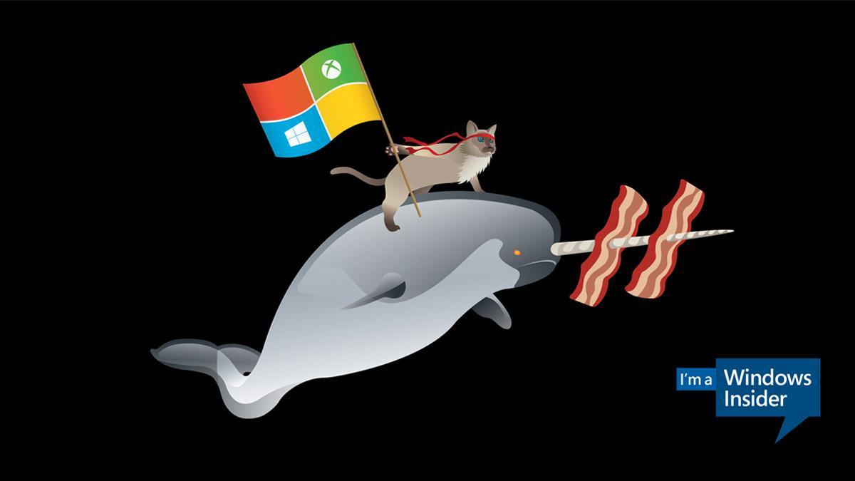 Denne ninjakatten skal fronte Windows 10