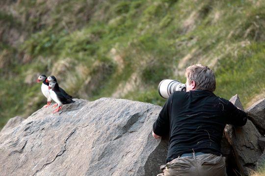 Lundefugl er tillitsfulle motiver og poserer villig for fotografen.