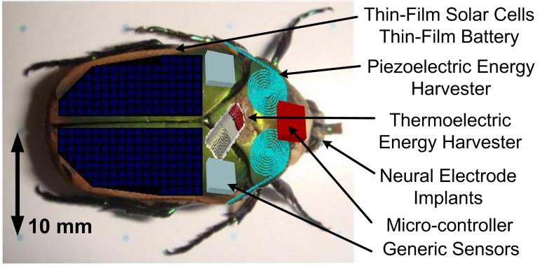 Vil utforske krigssoner med fjernstyrte insekter Tek.no