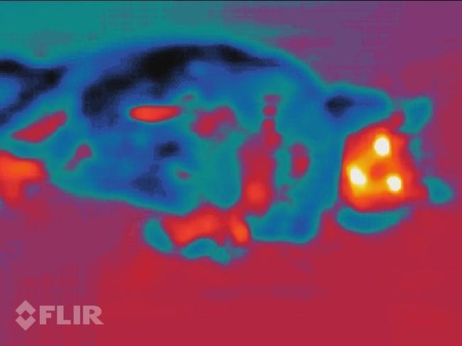 Slik ser det ut når man fotograferer en kald katt på varm asfalt med FLIR-kameraet i Cat S60.