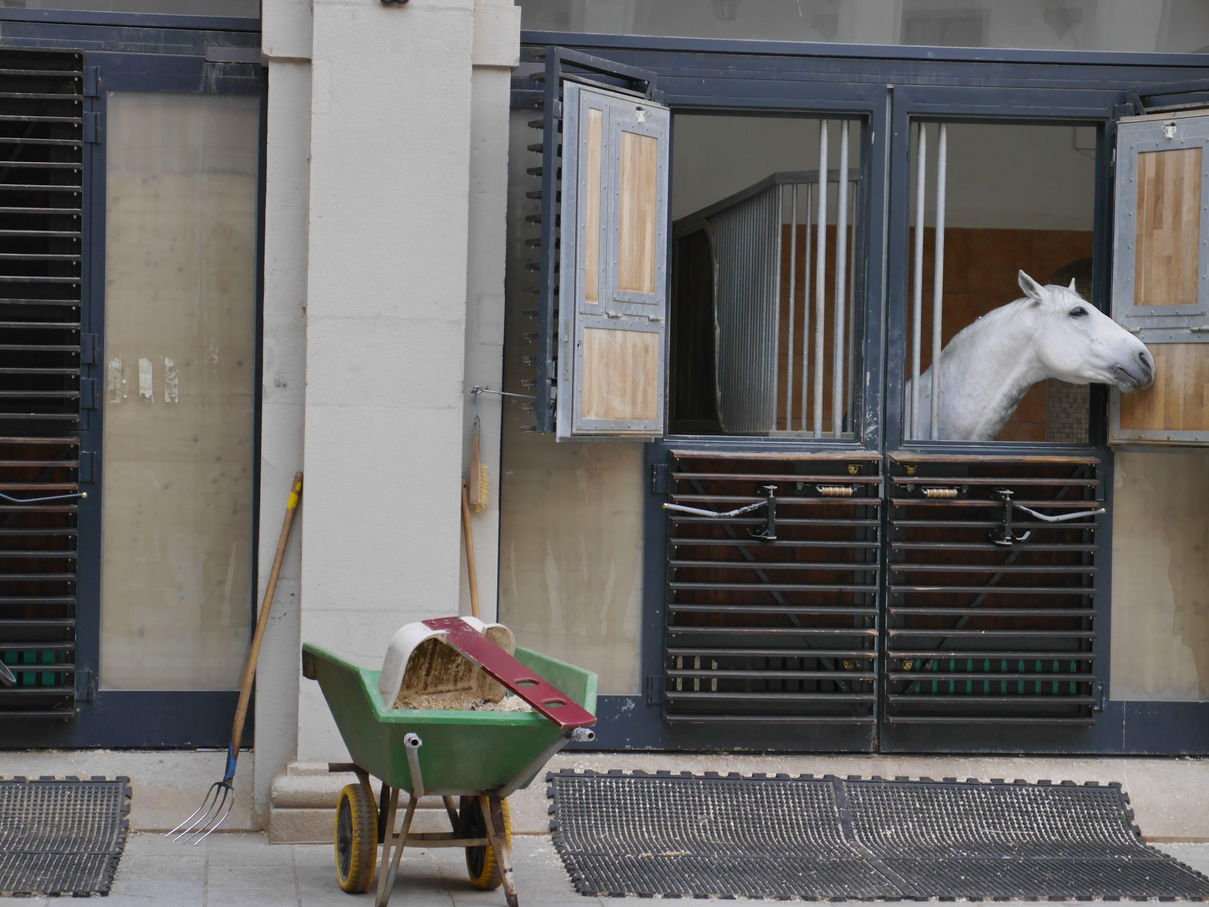 I Wien fikk vi blant annet besøke stallen til den spanske rideskolen.Foto: Are Thunes Samsonsen, Akam.no