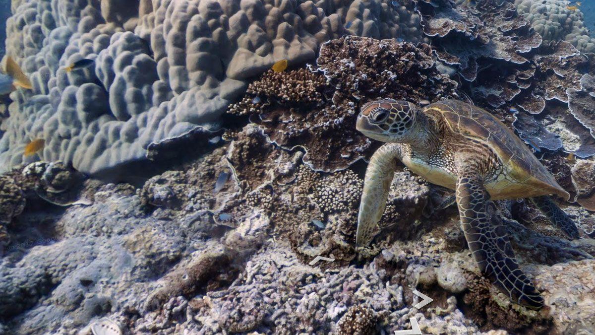Studer de vakre korallrevene med Google