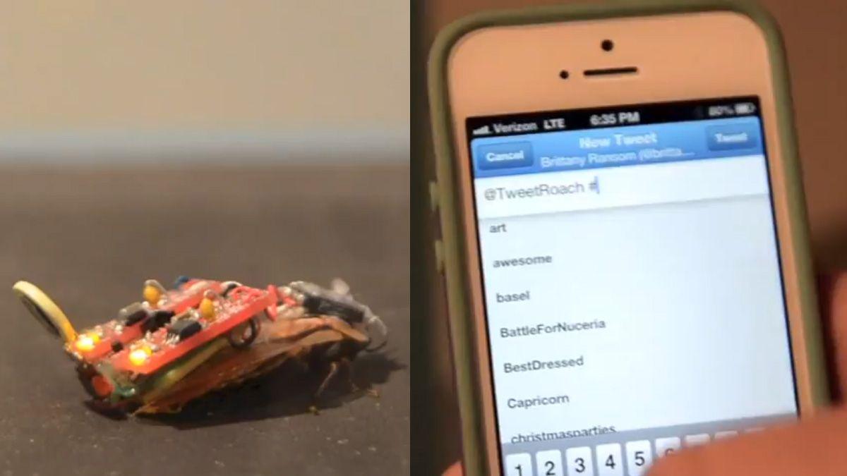 Styr kakerlakken via Twitter