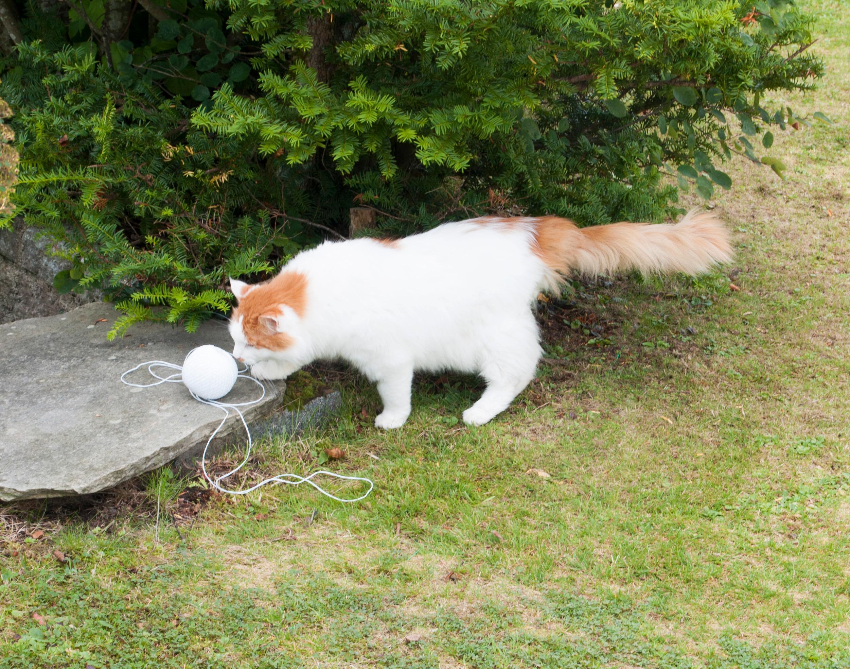 Katten skjønner ikke så mye av hva som foregår, men den skjønner hyssing, og har ikke blitt overkjørt av Robomow en eneste gang.Foto: Finn Jarle Kvalheim, Amobil.no