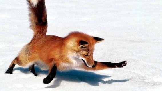 Firefox med turbohastighet