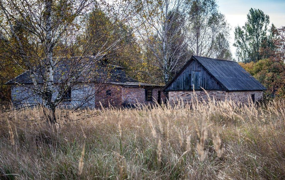 Flere bondegårder og småbruk (her fra landsbyen Stechanka ved Tsjernobyl) ble evakuert i all hast etter eksplosjonen. Husdyrene måtte de bare slippe løs, og så fikk de klare seg som best de kunne. De aller fleste klarte seg forbløffende bra, og ble ville og formerte seg. Resten av naturen hadde det også mye bedre med ekstra stråling i stedet for mange mennesker….