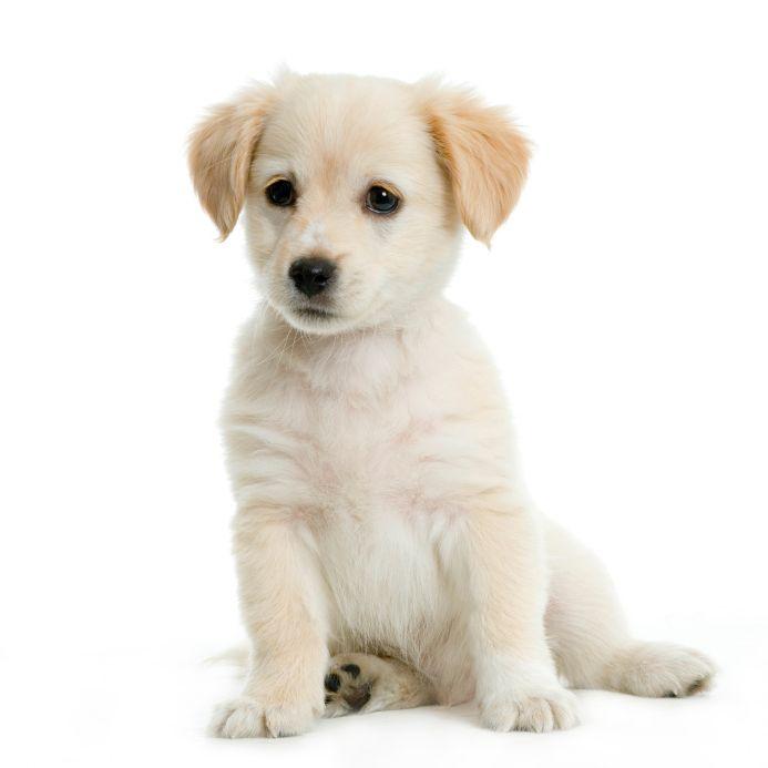 Vi tviler egentlig på at denne hunden er gratis.