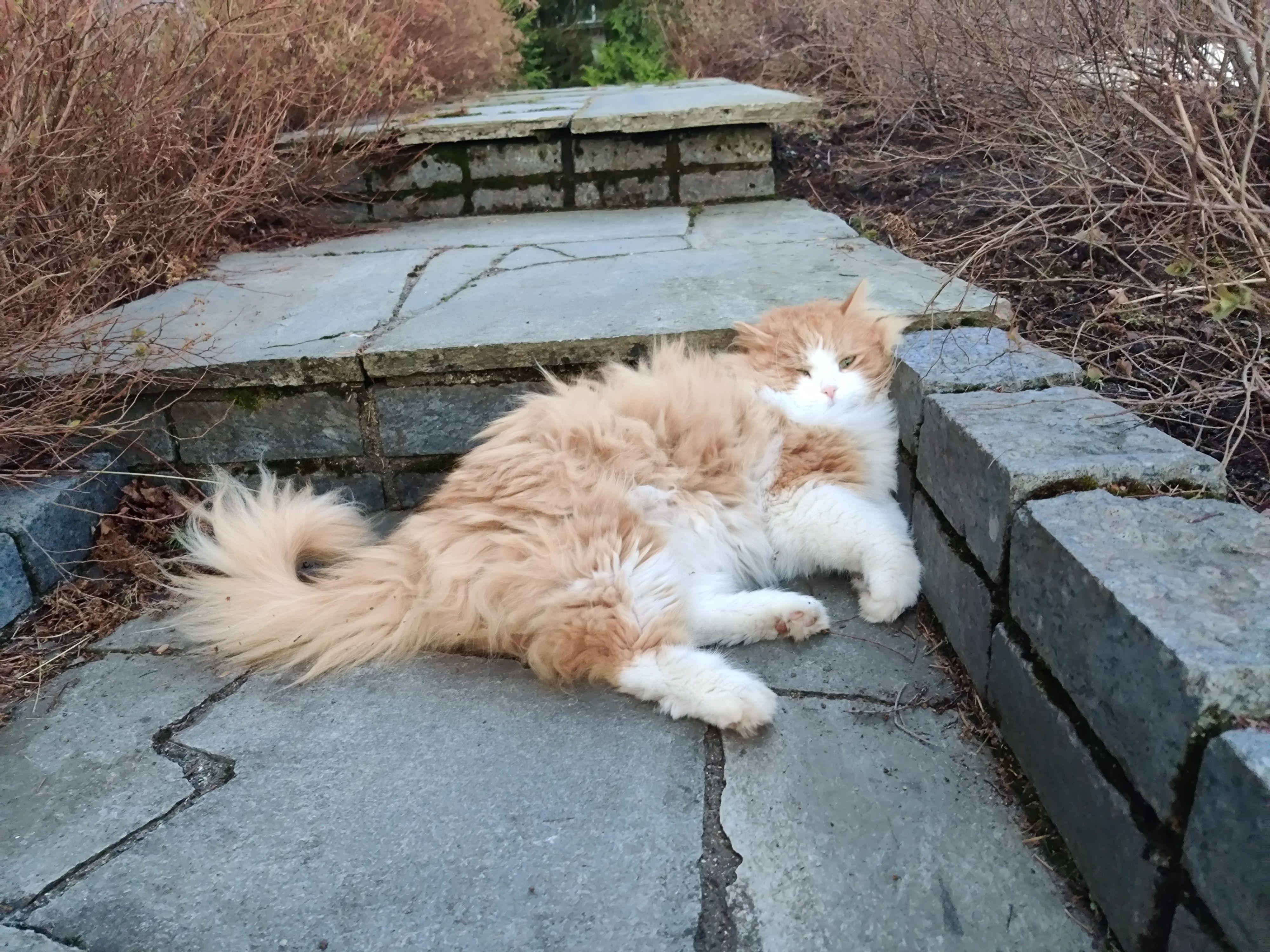 Katta fant den mest behagelige plassen i hagen.