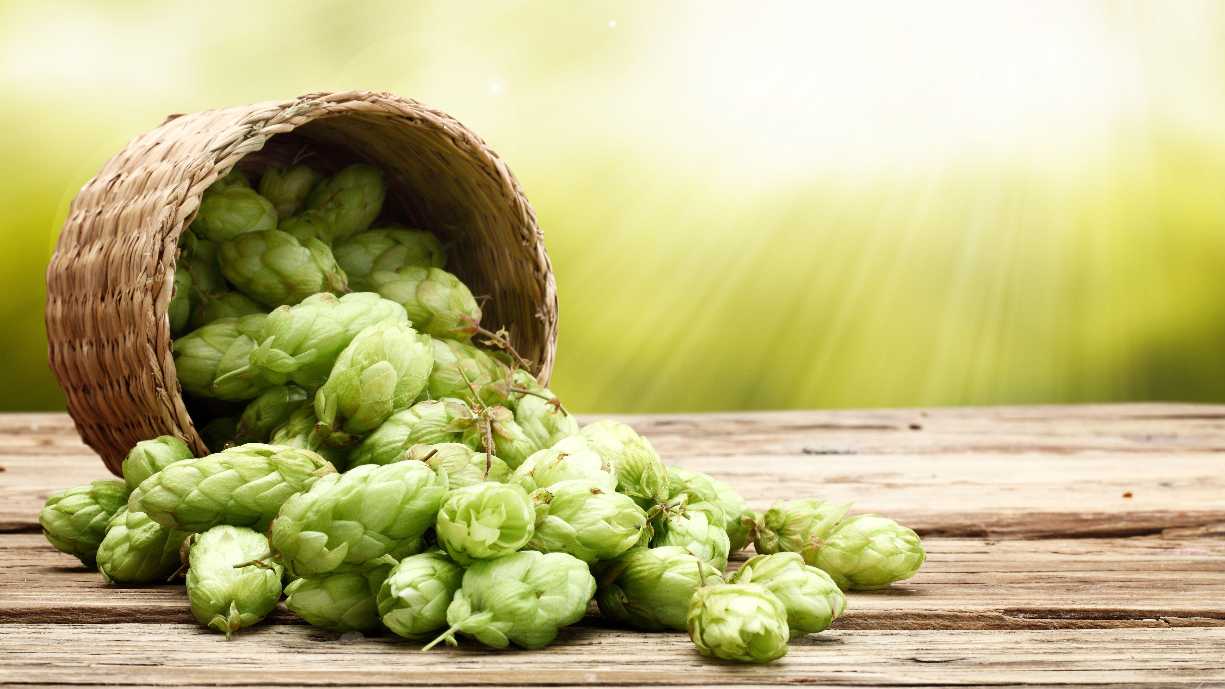 Humle er essensielt i dagens øl.Foto: Shutterstock