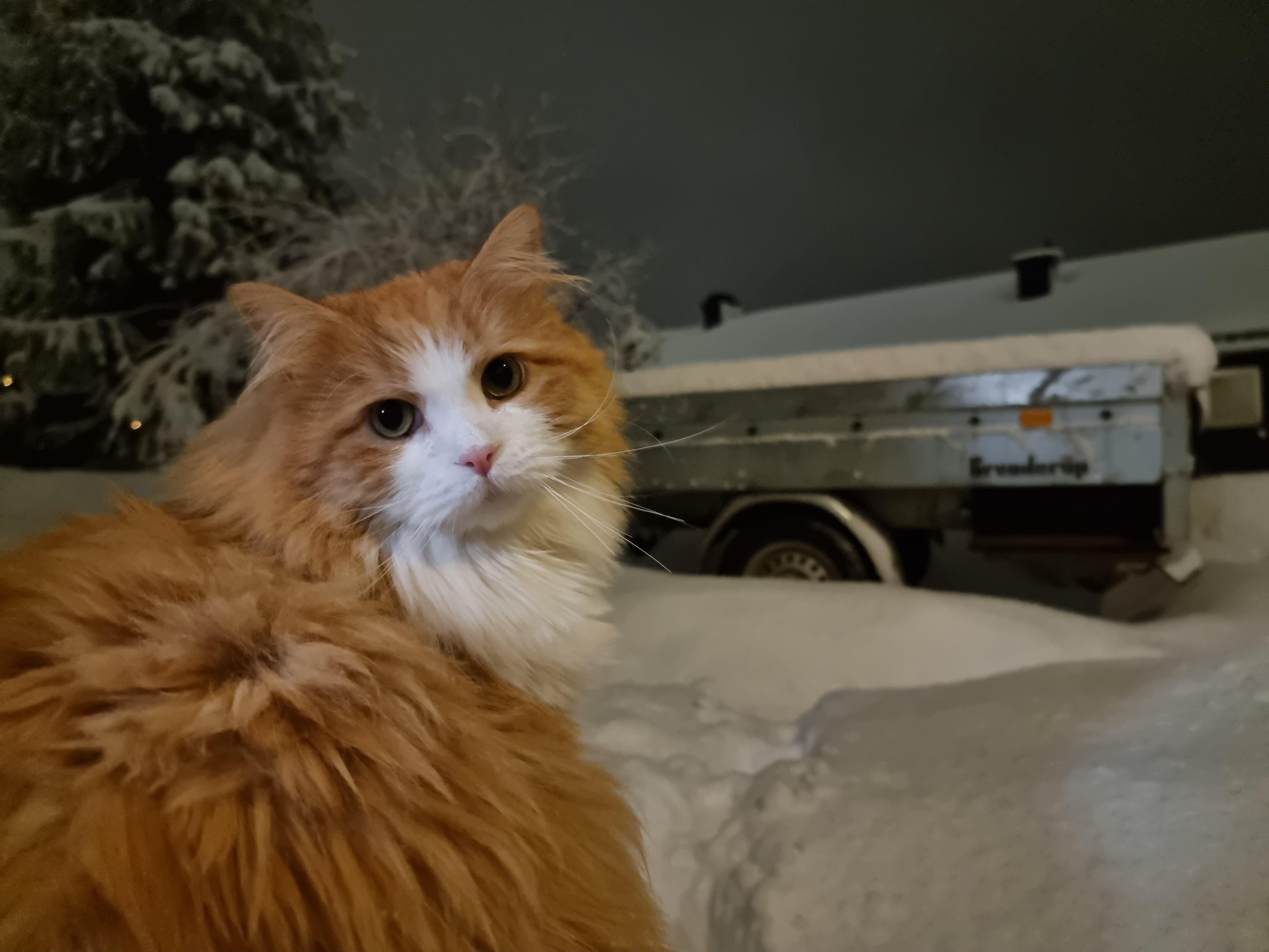 Katt i halvmørke - lang eksponering.