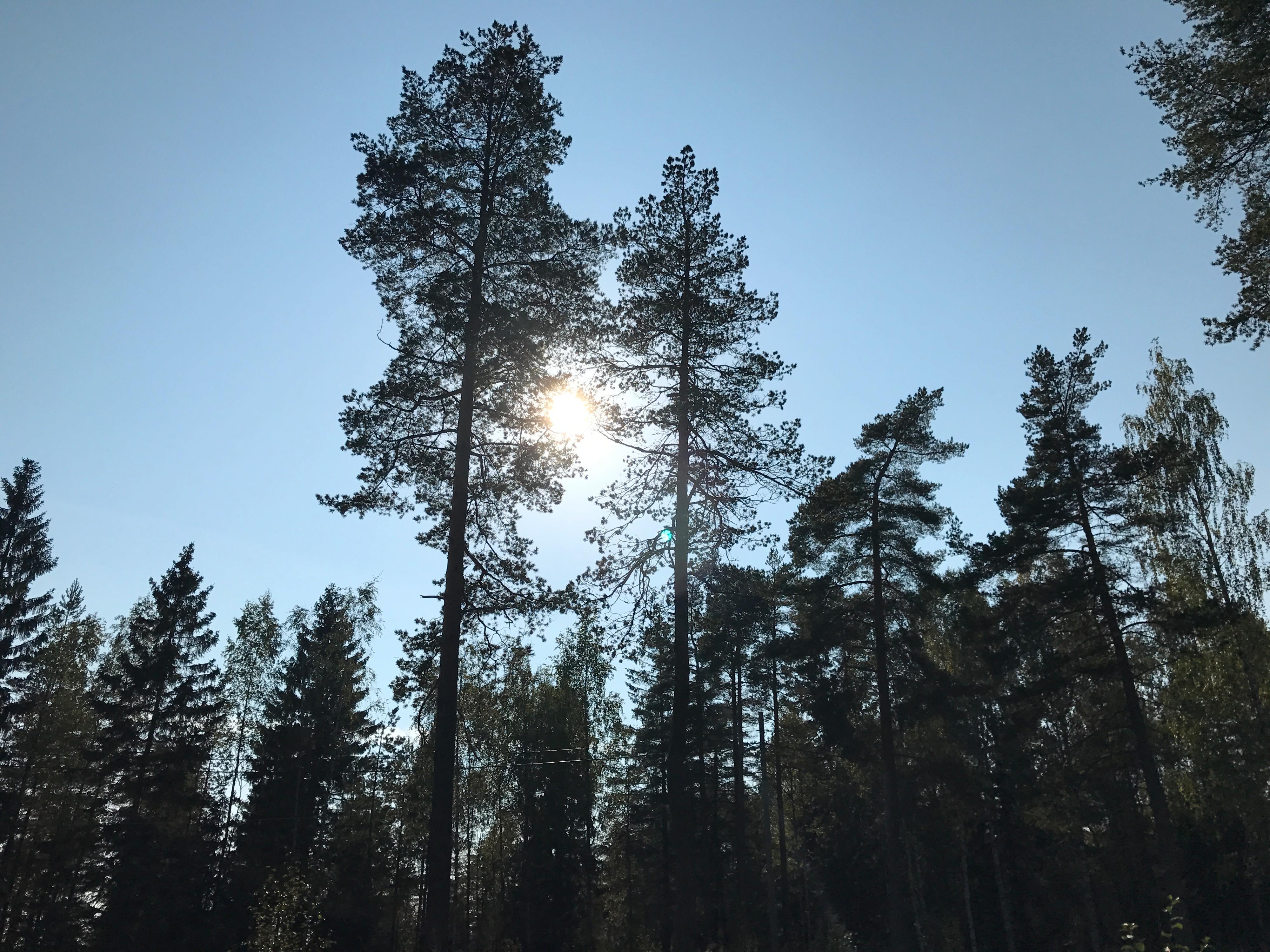 iPhone 7-kameraet takler vanskelige eksponeringsforhold meget godt. Rett nok skygger de to trærne litt for solen her, men det var likevel vanskelig å se direkte i samme retning som bildet ble tatt. Her ville de fleste mobiltelefoner laget et ganske håpløst bilde.