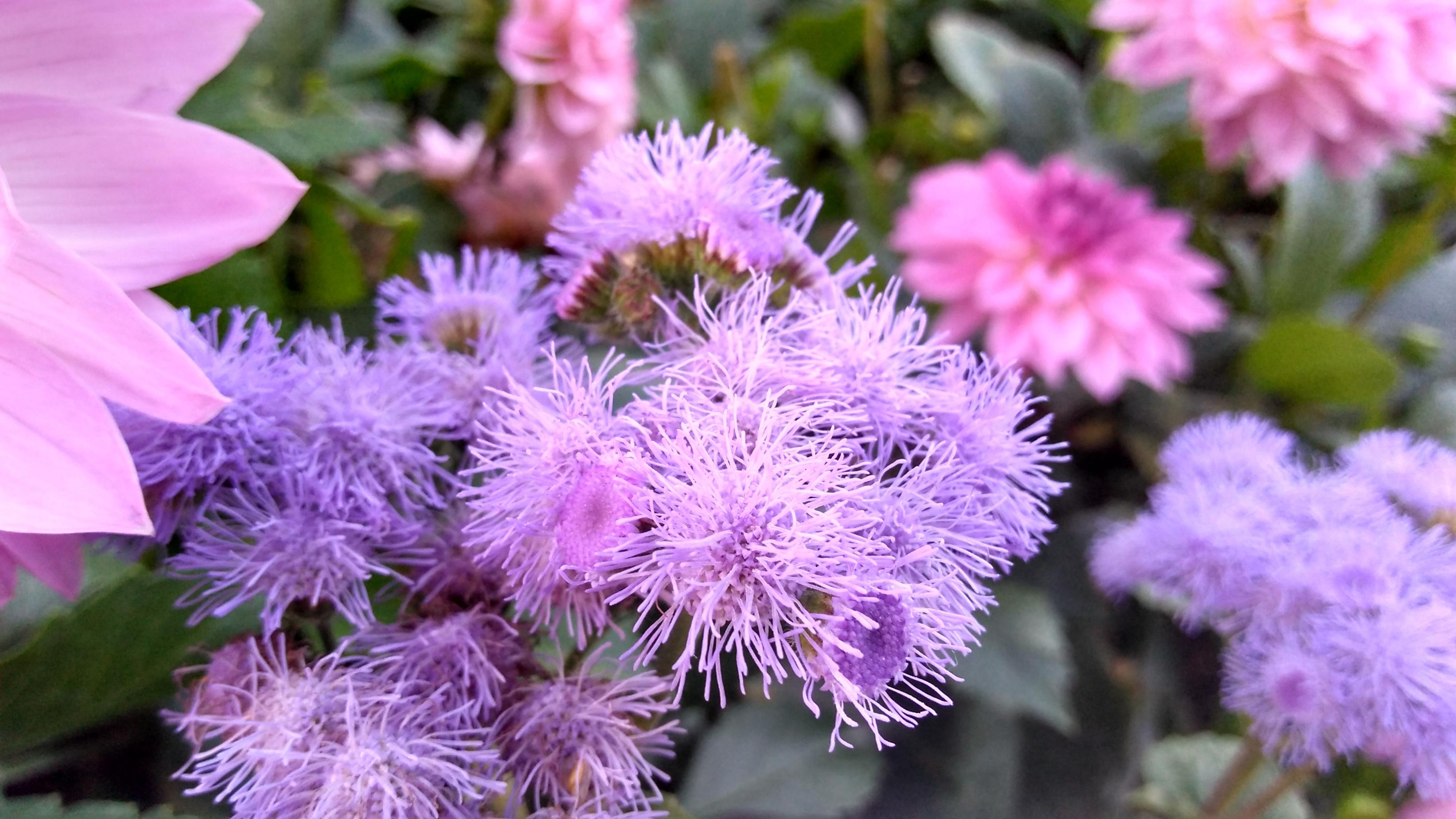 Diss blomstene er egentlig knallblå – ikke lilla som G4 Play prøver å overbevise oss om.
