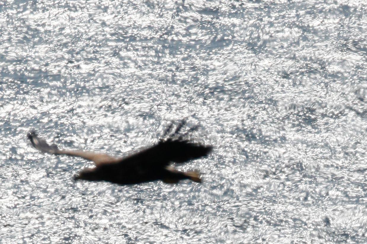 Her har autofokusen blitt lurt av refleksene i sjøen