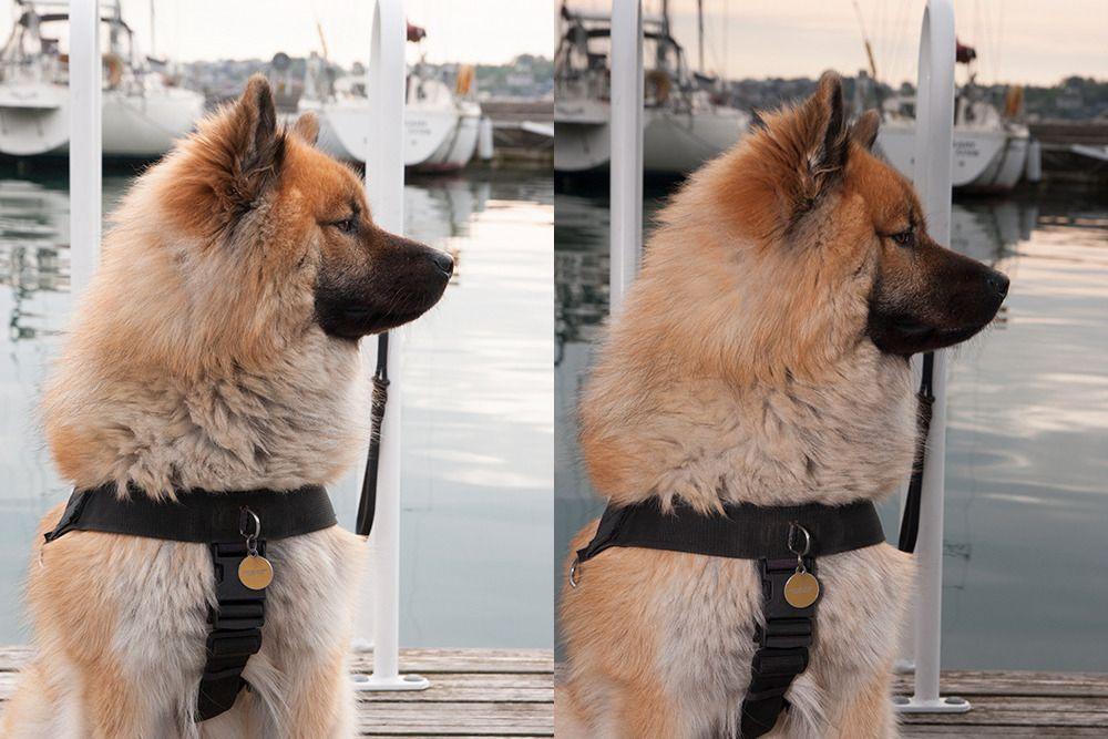Bildet til høyre er tatt med blits, slik at bakgrunnen tones ned.Foto: Kristoffer Møllevik
